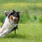 犬を公園のドッグラン内で遊ばせてたらいきなり後ろから突き飛ばされ鞄をひったくられた!!何も出来ずにいたら…